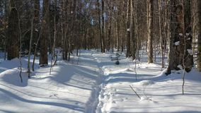 Snowy hiking trail. Stock Image