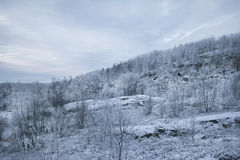 Snowy hill covered with forest. The rise of the snow-covered hill covered with forest Stock Photo