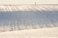 Snowy hill with stripes on field and single tree. Snowy hill with stripes on the field and single tree stock photography