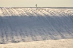 Snowy hill with stripes on field and single tree. Snowy hill with stripes on the field and single tree royalty free stock photography