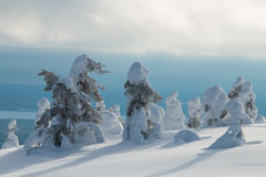 Snowy hilltop in Finnish Lapland. Snowy hilltop in Finnsih Lapland with some tykky trees in Riisitunturi National Park Royalty Free Stock Images
