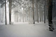 Snowy-Holz, versteckend im Nebel stockbilder