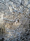 Snowy idyll. Tree branches under snow, winter Royalty Free Stock Image