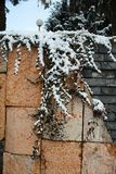 The snowy ivy on the wall stock photos