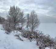 Snowy January morning in Nevsky forest Park. The Bank of the riv. Er Neva stock photos