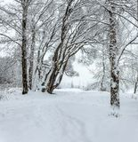 Snowy January morning in Nevsky forest Park. The Bank of the riv. Er Neva royalty free stock images