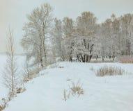 Snowy January morning in Nevsky forest Park. The Bank of the riv. Er Neva stock image