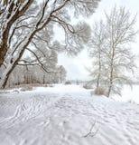 Snowy January morning in Nevsky forest Park. The Bank of the riv. Er Neva stock photography