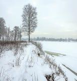Snowy January morning in Nevsky forest Park. The Bank of the riv. Er Neva royalty free stock photography