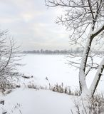 Snowy January morning in Nevsky forest Park. The Bank of the riv. Er Neva royalty free stock photos