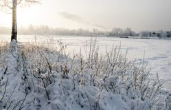 Snowy January morning in Nevsky forest Park. The Bank of the river Neva stock images