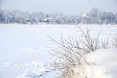 Snowy January morning in Nevsky forest Park. The Bank of the river Neva stock photo