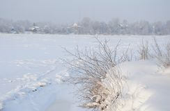 Snowy January morning in Nevsky forest Park. The Bank of the river Neva royalty free stock photos