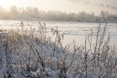 Snowy January morning in Nevsky forest Park. The Bank of the river Neva stock photos