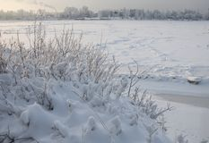 Snowy January morning in Nevsky forest Park. The Bank of the river Neva royalty free stock photography