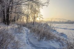 Snowy January morning in Nevsky forest Park. The Bank of the river Neva stock photography