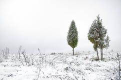 Snowy juniper tree in a field. winter landscape. Snowy juniper tree in a field. winter landscape royalty free stock photography