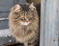 Snowy-Katze Lizenzfreies Stockfoto