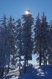 Snowy-Kiefer auf den Bergen 2 stockbilder