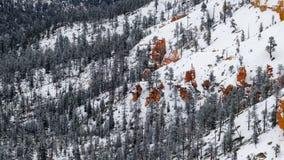 Snowy-Kiefer - bryce Schlucht lizenzfreie stockfotografie