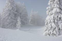 Snowy-Kiefern Stockfotos