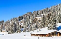 Snowy-Kiefern Lizenzfreies Stockbild