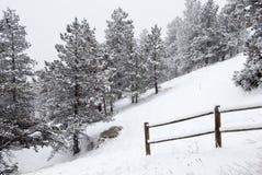 Snowy-Kiefern auf einer steilen Steigung durch einen Zaun Lizenzfreie Stockbilder