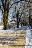 Snowy Kiev embankment in Uzhgorod. Beautiful and sunny winter day. walk on fresh air along the chestnut tree alley Stock Image