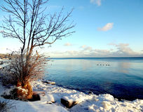 Snowy Lakefront Royalty Free Stock Photography