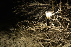 Snowy lamp in the dark. Snowy lamp surrounded by snow covered branches in the evening. Black background Stock Image