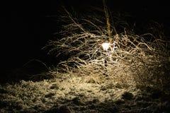 Snowy lamp in the dark Stock Image
