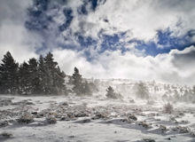Snowy landscape. During a wind storm. Winter scene Royalty Free Stock Photography
