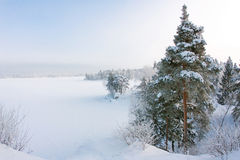 Free Snowy Landscape Royalty Free Stock Photography - 17184287