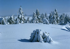 Snowy Landscape. And forested trees Stock Photos