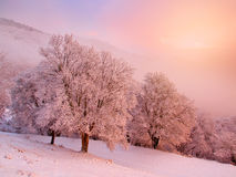 Snowy landscape. Royalty Free Stock Photo