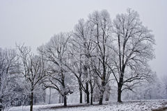 Snowy landscape. Of trees in park Royalty Free Stock Photo