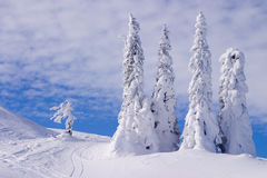 Snowy landscape. On Jahorina mountain near Sarajevo, Bosnia and Herzegovina, with blue sky and white clouds Stock Photo