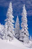 Snowy landscape. On Jahorina mountain near Sarajevo, Bosnia and Herzegovina, with blue sky and white clouds Stock Photos