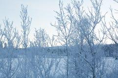 Snowy landscape. Winter in Sweden: snowy landscape Stock Photo