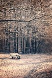 Snowy landscape with a bench and a forest in winter Stock Photography