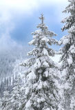 Snowy landscape in christmas time - trees with snow in the alps. Royalty Free Stock Photography
