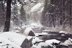 Snowy landscape with a creek and pine trees in Yosemite National Park Royalty Free Stock Image