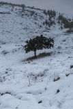 Snowy landscape in Crete royalty free stock images