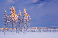 Snowy landscape in Finnish Lapland in winter at sunset Stock Photo