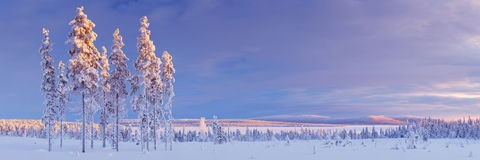 Snowy landscape in Finnish Lapland in winter at sunset Royalty Free Stock Images