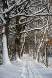 Snowy landscape footpath. Snow in the forest snowy footpath stock image