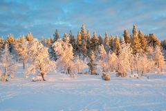 Snowy landscape, frozen trees in winter in Saariselka, Lapland Finland. Snowy landscape, frozen trees in winter in Saariselka, Lapland, Finland royalty free stock photos