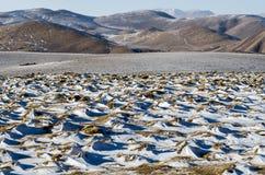 Snowy landscape on a high altitude Tibetan mountain pass Stock Photo