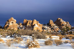 Snowy Landscape in Joshua Tree National Park Royalty Free Stock Photography