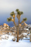 Snowy Landscape in Joshua Tree National Park Stock Photography